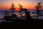 pines-at-sunrise-2