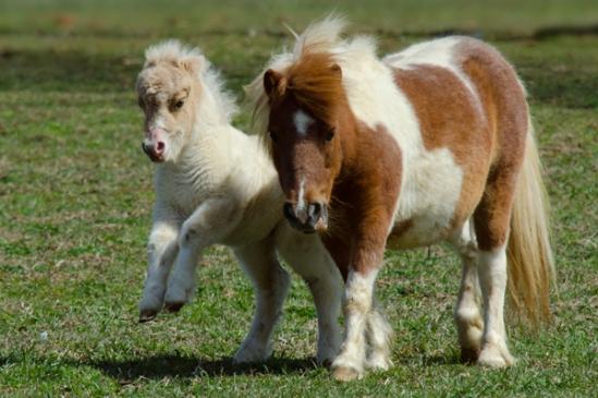 jumping-horse2