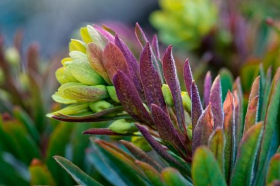 spring-plant