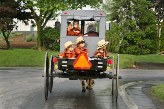 amish-brothers-buggy-trio