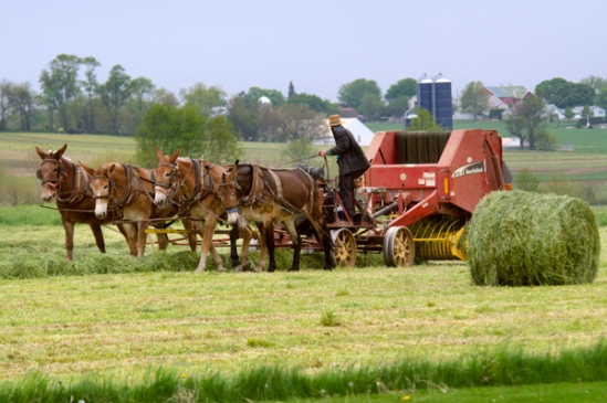 amish-hay-baling
