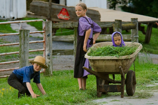 amish-kid-in-wheelbarrow