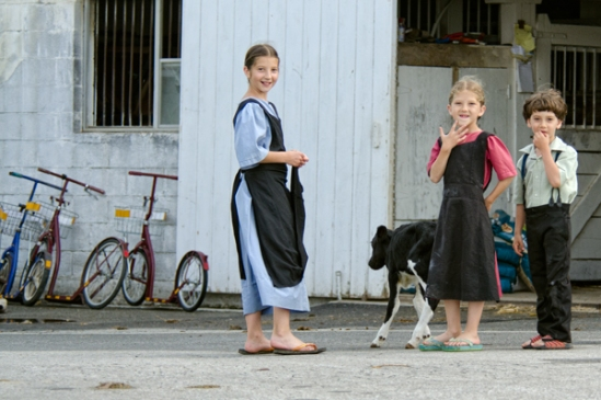 amish-trio-with-calf