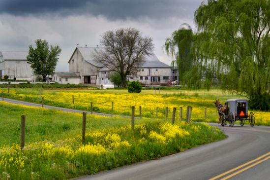 buggy-near-mustard-field
