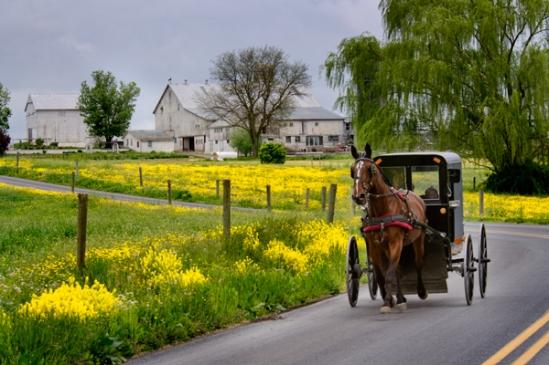 buggy-near-mustard-field2