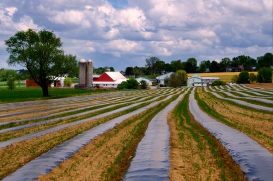 striped-farm-fields