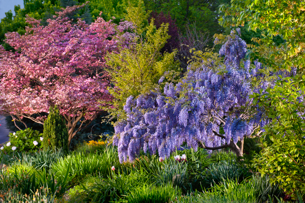 wisteria-garden