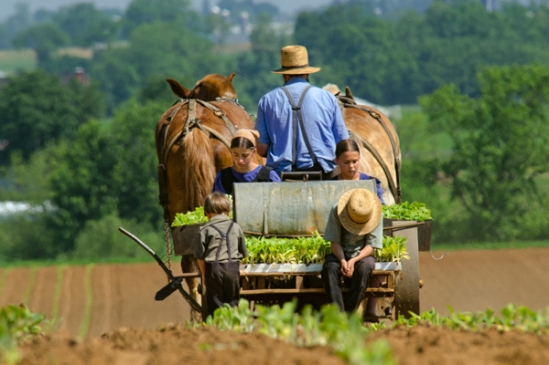 amish-family-planting2