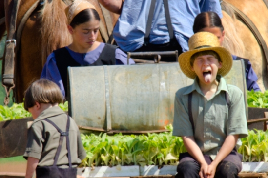 amish-family-planting3