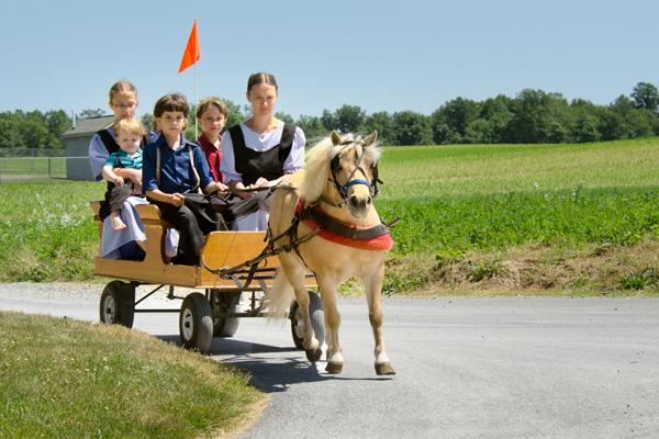 amish-pony-cartload