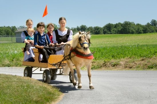amish-pony-cartload