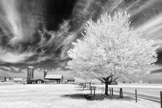 infrared-farm-scenic