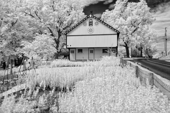 infrared-garden