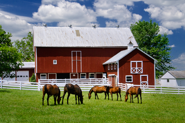 Horses In Pasture Donald Reese Photography