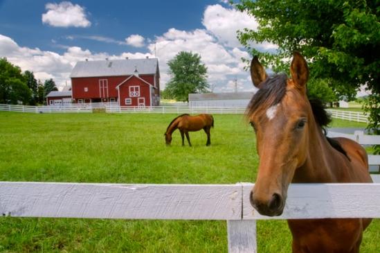 nosey-horse