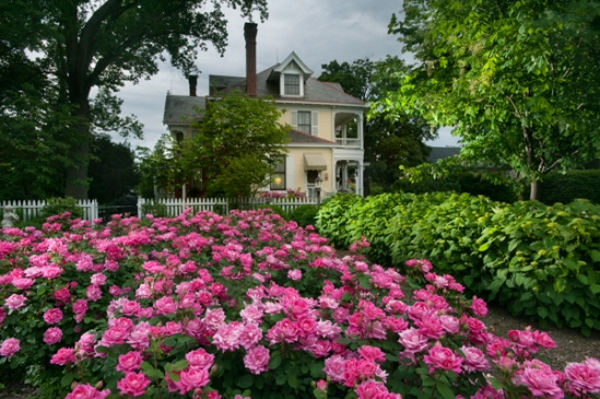 strasburg-mansion-roses