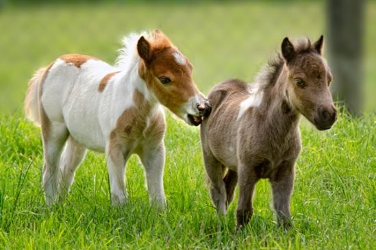 tiny-pony-nibbler