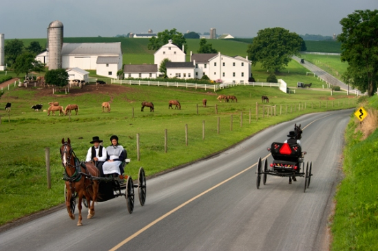 amish-open-buggy2