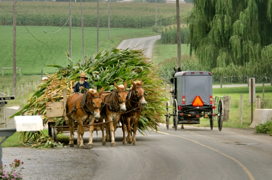 amish-load-yielding