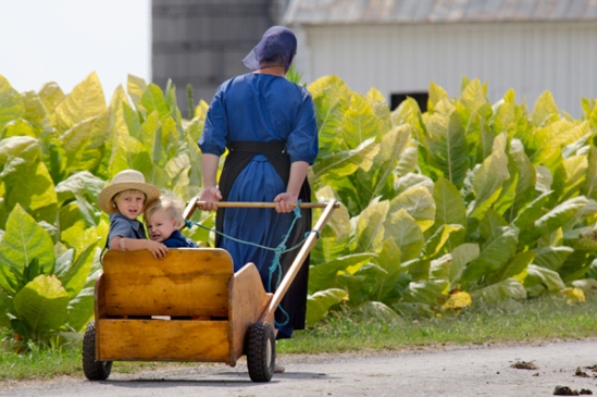 amish-pull-cart-kids