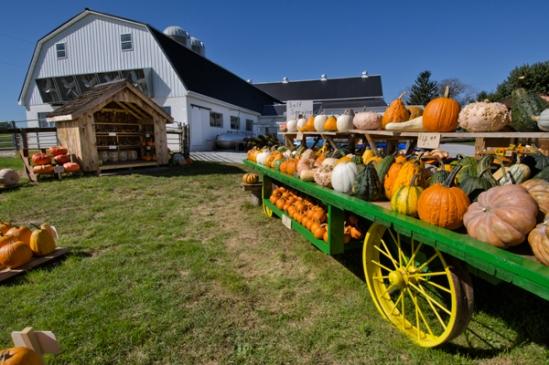 pumpkin-stand2