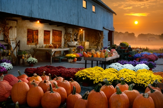 fall-market-sunrise