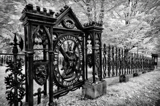 mount-auburn-cemetery7