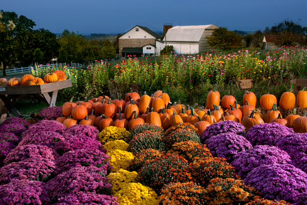 Fall Farm Harvest