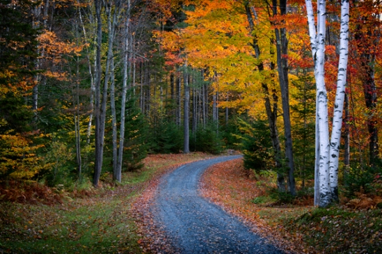 vermont-fall-backroad