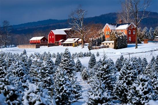 elizabeth-farms-snowscene