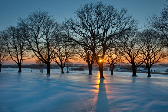Icy-snow-tree-sunset