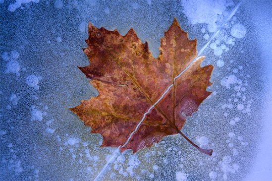 cracked-ice-leaf2