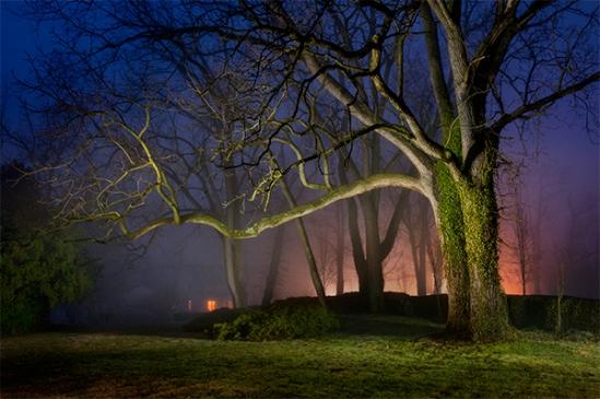 quarry-rd-foggy-tree3