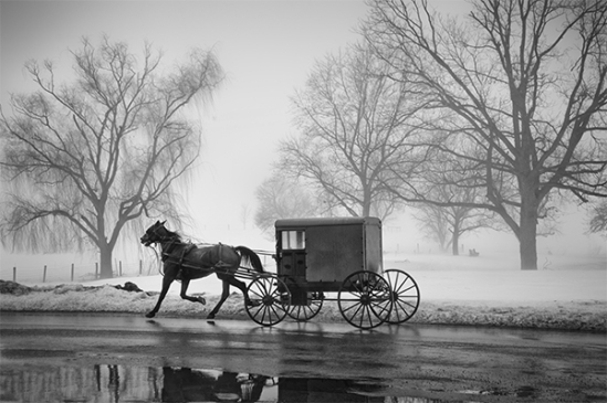 amish-buggy-in-fog