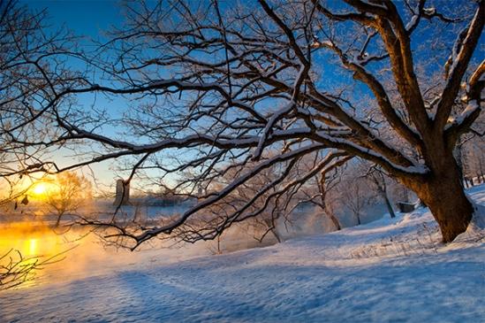 quarry-rd-tree-sunrise3