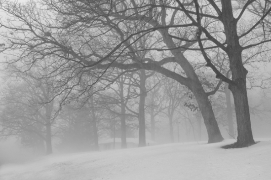 mysterious-fog