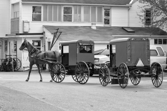amish-double-buggy