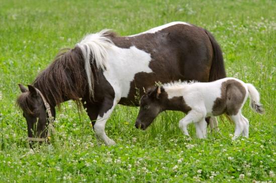 tiny-pony