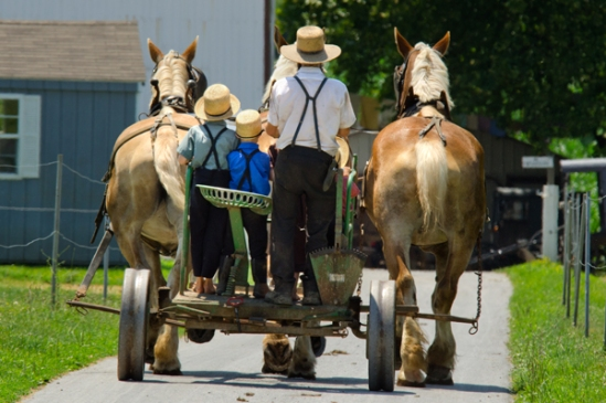 amish-cart-driving