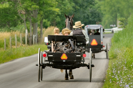 amish-hauling-harnesses