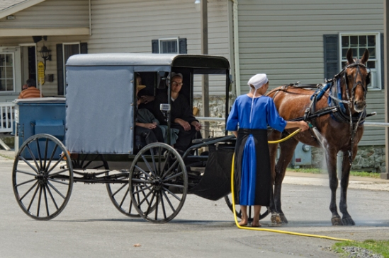 amish-horse-spray