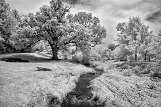 infrared-big-trees