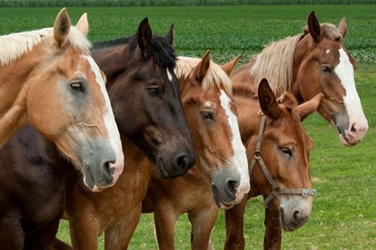 5horses