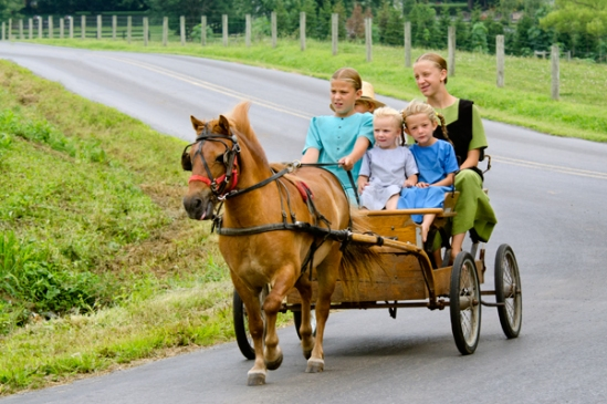 amish-pony-cart-adventure