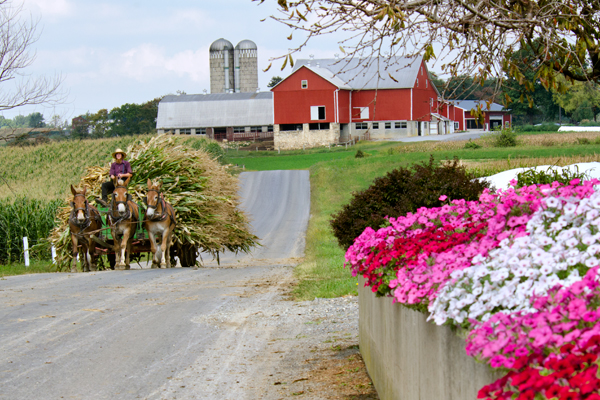 amish-fall-corn-hauling