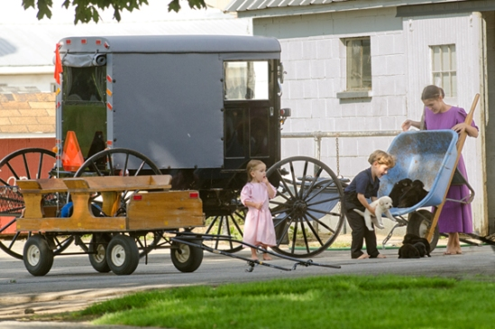amish-puppy-delivery