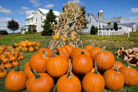 white-oak-pumpkins