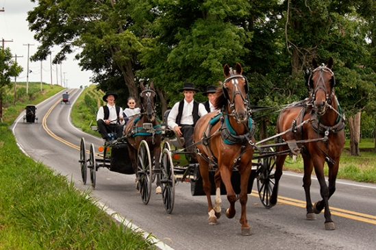 amish-two-horse-team