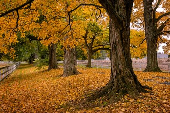 estate-fall-trees