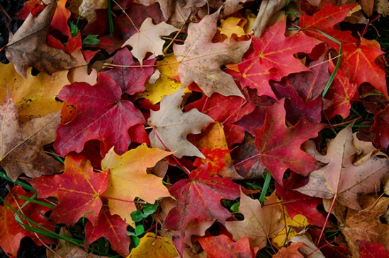 fall-leaf-carpet